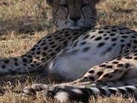 Best of Maasai Mara Wild Safari