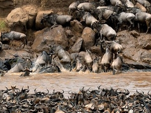 Masai Mara July Migration Safari Photos