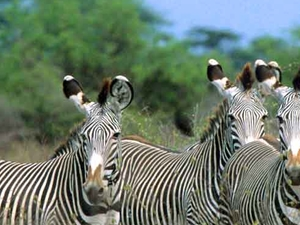 Meru National Park Package