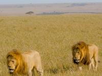 Masai Mara Road Trip