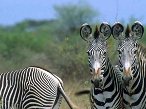 3 Days 2 Nights Meru National Park Photos