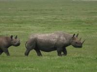 Explore Ngorongoro