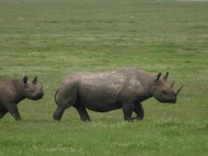 Explore Ngorongoro Photos