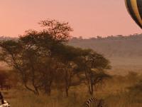 Serengeti Best Tour Low Season