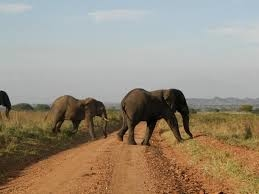 Kidepo Valley National Park Photos