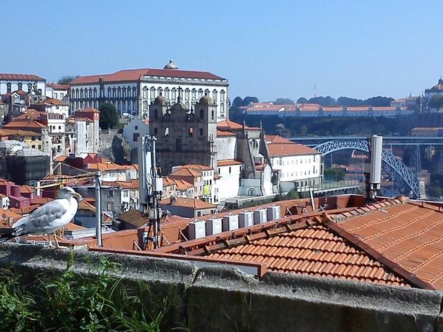 Walking Tour - Authentic Oporto Photos