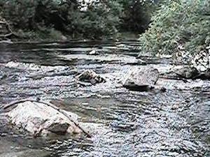 Chino Creek