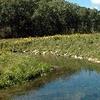 Waterloo Creek