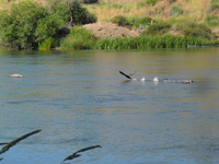 Link River