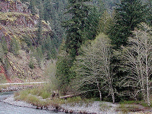 South Fork Clackamas River