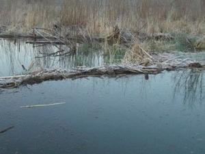 Weister Creek