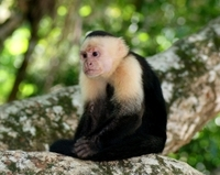 11-Day Tour from San Jose: Monteverde Cloud Forest and Tortuguero, Arenal Volcano and Manuel Antonio National Parks Photos