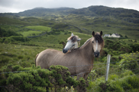 2-Day Connemara and Galway Bay Tour from Dublin by Train Photos