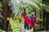 3-Day Hollyford Track Guided Walk with Scenic Helicopter Flight Photos
