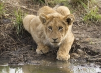 3-Day Kruger Park Wildlife Safari Photos
