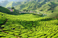 3-Night Cameron Highlands and Penang Tour from Kuala Lumpur Photos