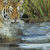 3-Night Chitwan National Park Safari from Kathmandu