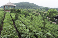 4-Day Hangzhou Private Tour: West Lake and Longjing Tea Plantation Photos