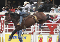 5-Night Canadian Rockies Tour from Vancouver with Calgary Stampede Admission Photos