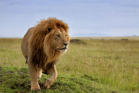 7-Night Small-Group Kenya Safari from Nairobi: Great Rift Valley Including Masai Mara  Photos