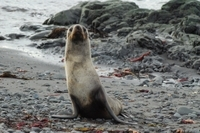 8-Day Antarctica Cruise with Round-Trip Flight from Punta Arenas Photos