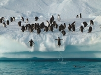 9-Day Antarctica Tour from Punta Arenas: Drake Passage, South Shetland and Antarctic Peninsula