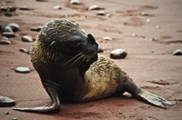 9-Night Galapagos Tour from Quito: San Cristobal, Isabela, Florena and Santa Cruz Island Photos