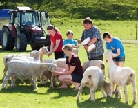 Agrodome Sheep Show and Farm Tour Photos