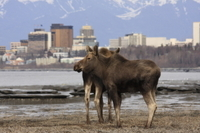 Anchorage Shore Excursion: Pre-Cruise Transfer and Tour from Anchorage to Whittier Photos