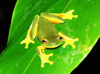 Atherton Tablelands Rainforest Wildlife Tour by Night Photos