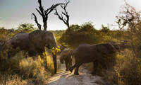 Big Five Afternoon Game Drive in Kruger National Park Photos