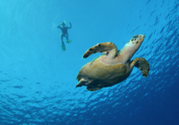 Big Island Snorkel Cruise Along Kohala Coast Photos