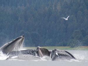 Juneau Shore Excursion: Whale-Watching Cruise and Glacier Flight Photos