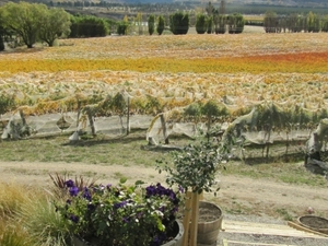 Central Otago Wine Tours from Queenstown Photos