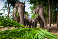 Chiang Mai Adventure: Elephant Camp, Zipline, Whitewater Rafting and Long-Neck Hill Tribe Photos