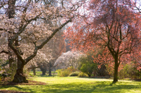 Christchurch Half-Day Gardens Tour Photos