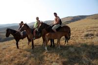 Christchurch Horse Trekking Photos