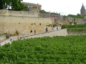 Bordeaux Vineyards Wine Tasting Half-Day Trip Photos