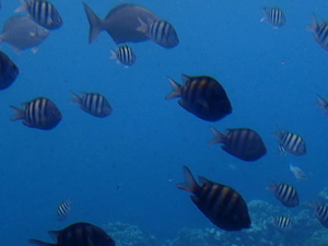 Grand Cayman Shore Excursion: Semi-Submarine and Fish Feeding Show Photos