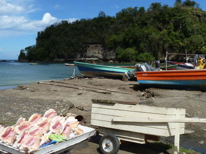 Soufriere Island Delight Half-Day Trip From St Lucia Photos
