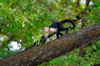 Costa Rican Wildlife in Palo Verde National Park Photos