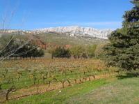 Cotes de Provence Wine Tour from Aix-en-Provence Photos