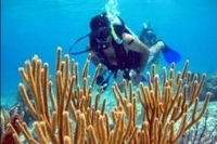 Cozumel Shore Excursion: PADI Certified Scuba Diving Photos