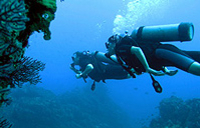 Dedicated Dives for Certified Divers from Puerto Vallarta Photos