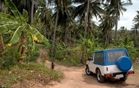 Dominica Shore Excursion: Half Day Jeep Safari
