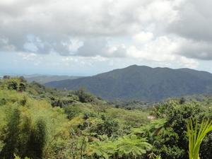 El Yunque Rainforest Half-Day Trip from San Juan Photos