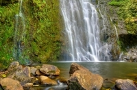 East Maui Waterfalls and Rainforest Hike Photos