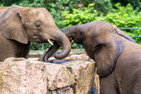 Elephant Orphanage Sanctuary and Aboriginal Settlement Tour from Kuala Lumpur Photos