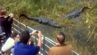 Florida Everglades Airboat Tour and Alligator Encounter from Orlando Photos
