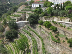 Day Trip to Douro Photos
